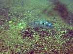 подводный мир Черного моря Дайвинг на Черном море