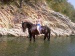 Лазаревское прогулки на лошадях