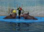 Лазаревский дельфинарий
