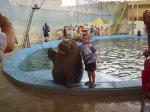 Дельфинарий Лазаревское морж