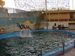 Дельфинарий в Лазаревской