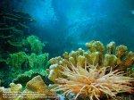 Океанариум Адлер www.marin-tur.ru