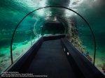 Океанариум Адлер в Курортном городке