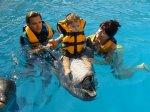 Дельфинотерапия цены