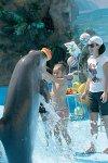 Дельфинарий Анапа-плавание с дельфинами