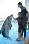 Анапа дельфинотерапия для детей