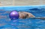 Дельфинарий- время работы