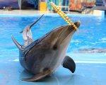 Дельфинарий на Черном море-Анапа