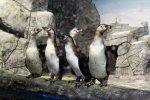Пингвинарий в Анапе