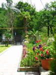 Отдых на Черном море Сочи